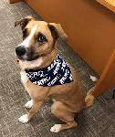 Click here for more information about Dog Bandana